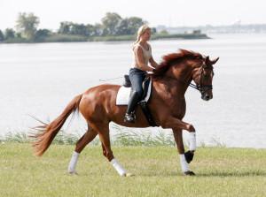 jahanje-konj